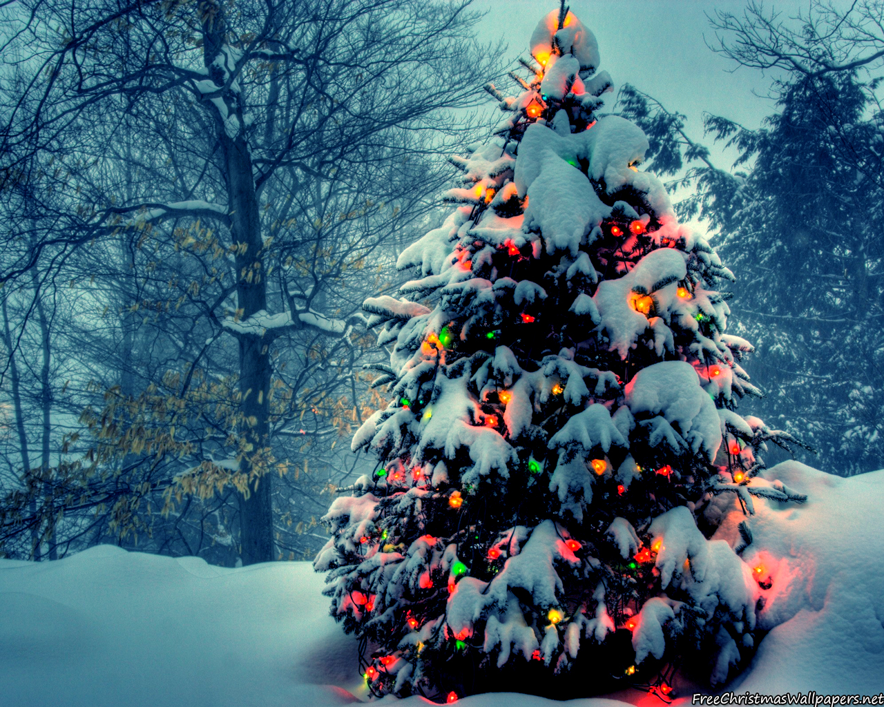 christmas-tree-with-lights-in-nature-968340